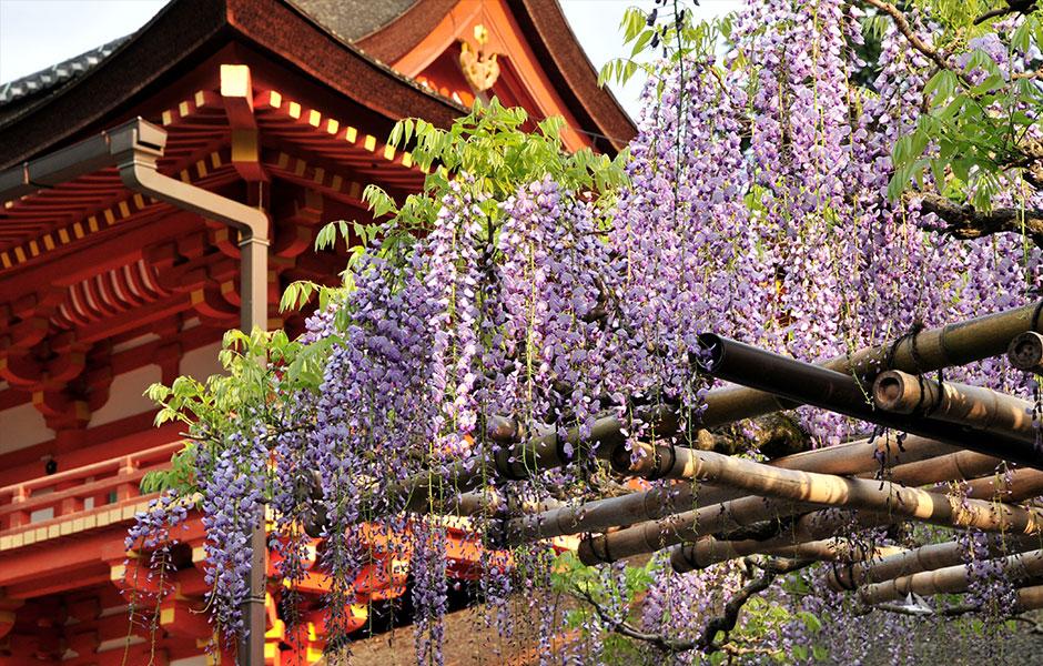 【おでかけ・観光情報 奈良】令和の世界・春日大社『萬葉植物園』